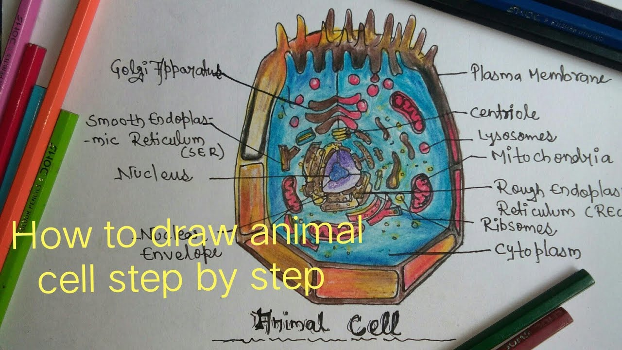 how to draw animal cell step by step [ 1280 x 720 Pixel ]