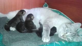 3-х дневные котята и их мамочка Алиса