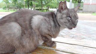 いつも一人ぼっちだったマーブル黒猫が茶トラ猫と一緒に雨宿り