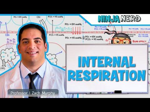 Respiratory | Internal Respiration