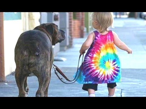 Babies Taking Dogs For A Walk Compilation 2014 [NEW]