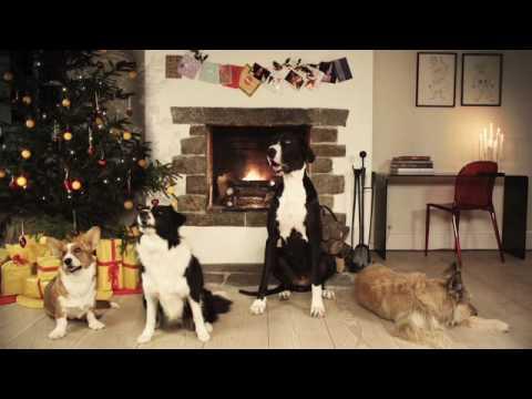 Barking christmas dogs - amazing!
