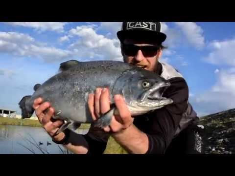 New Zealand South Island Canal Trout and Salmon