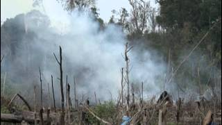 Indonesian Fires Reveal Unfufilled Environmental Promises