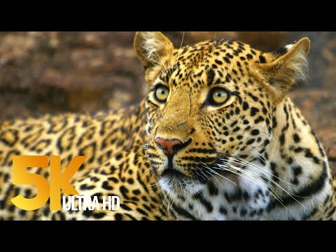 5K African Wildlife - Kruger National Park in South Africa -