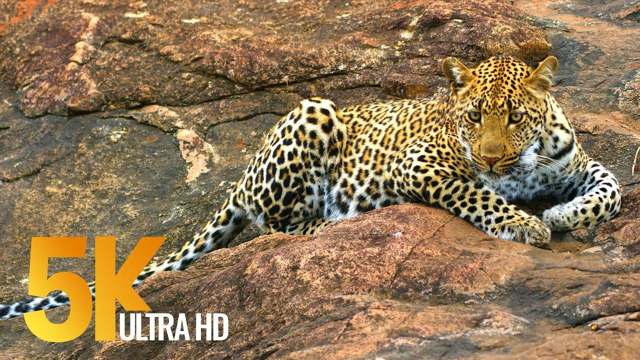 Download 5K African Wildlife - Kruger National Park in South Africa - 1.5 HRS