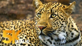 5K African Wildlife - Virtual Trip to Kruger National Park in South Africa - 1.5 HRS