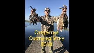 Охота на утку 2018/ открытие охоты