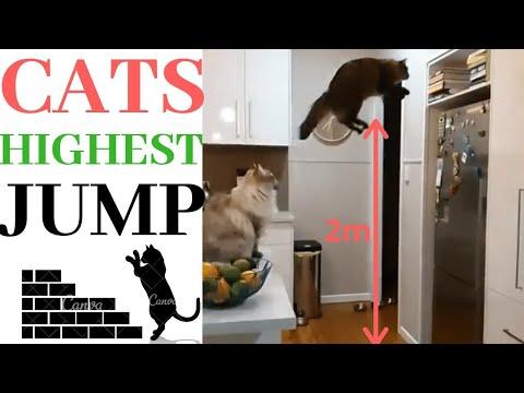 Cats highest jump compilation