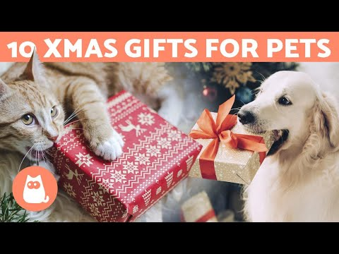 10 CHRISTMAS GIFT IDEAS 🎁 For Dogs And Cats