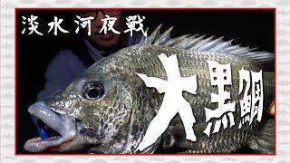 淡水河挑戰夜釣大魚!沒想到這邊的黑鯛這麼兇    八里|黑格|海鱸|FOX釣點