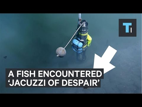 What happened when fish swam near 'Jacuzzi of Despair'
