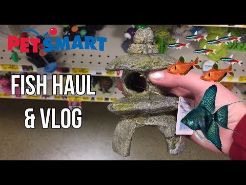 Fish Haul & Vlog (Fish, Decorations) | AquaticEm