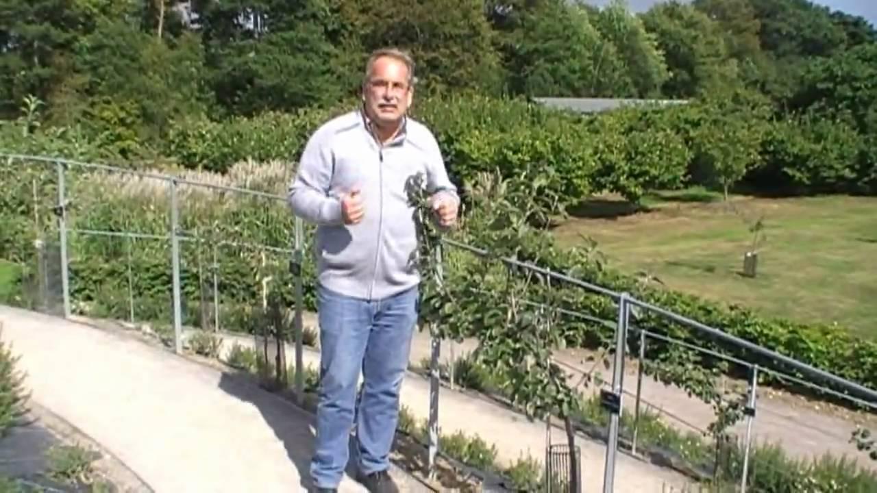 Erhaltungsschnitt Fur Apfelspaliere Gefilmt In Wisley Youtube