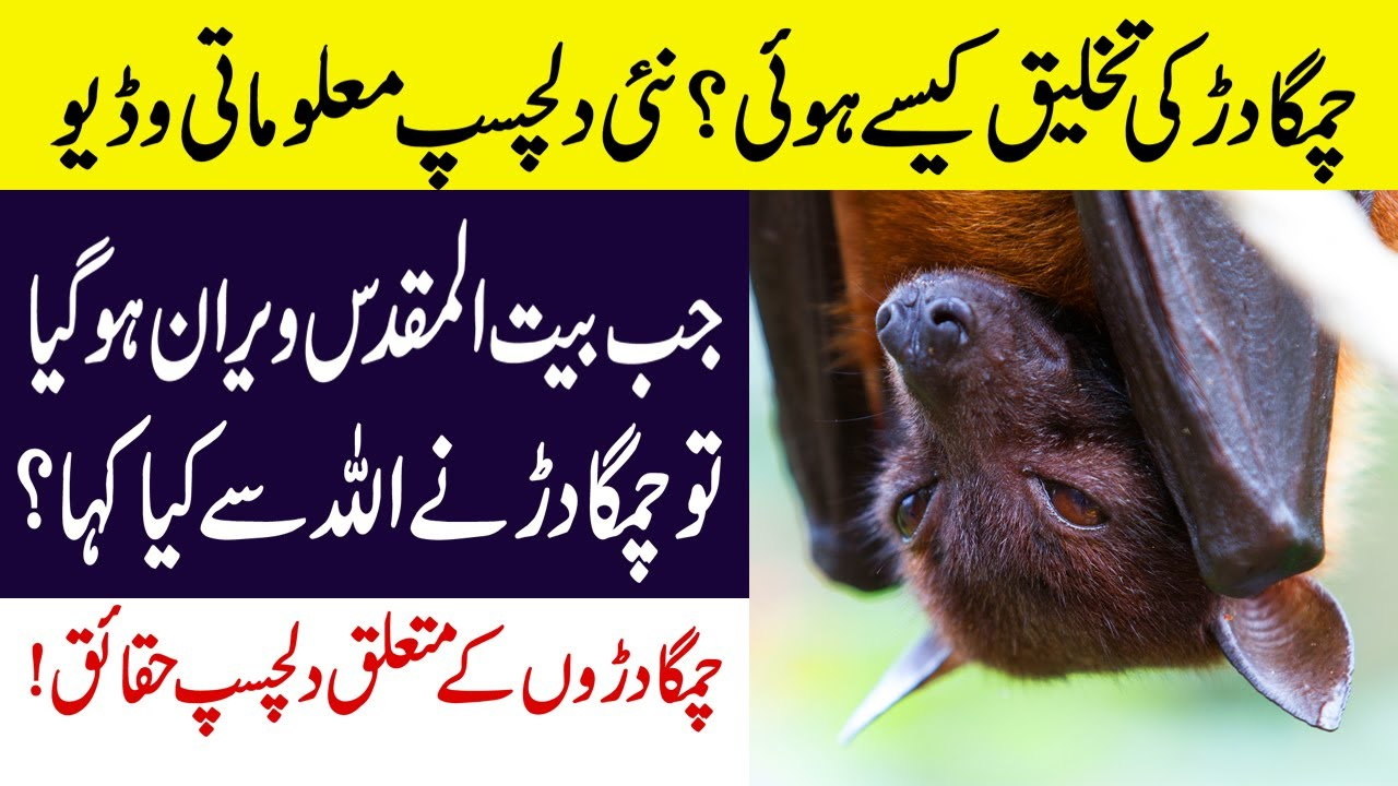 Hidden and Interesting Facts About Bats in Urdu/Hindi || چمگادڑ کی تخلیق کیسے ہوئی؟ || UIL