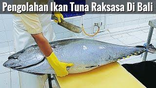 PROSES PENGOLAHAN IKAN TUNA MENJADI TUNA KATSU DI BALI - Making Of Katsu From Giant Yellowfin Tuna