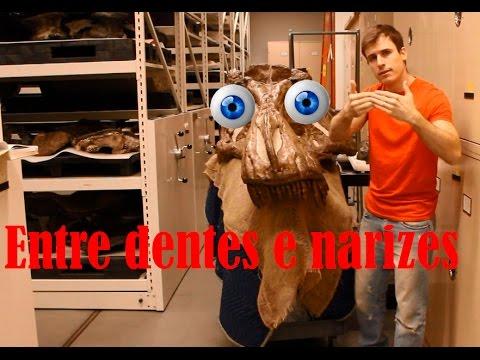 T rex:  Entre dentes e narizes