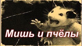 Мыши в улье,,,КАК ОПРЕДЕЛИТЬ(, 2016-11-24T07:04:24.000Z)
