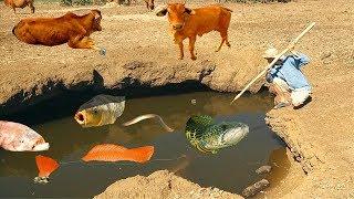 Bắt Cá Bằng Phi Lao Giống Người Nguyên Thủy Và Cái Kết Khó Tin.Primitive Catching Fish By Hands