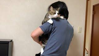 お父さんに抱っこさせてあげる猫