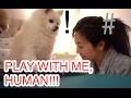 PLAY WITH ME, HUMAN!