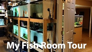 My Fish Room Tour