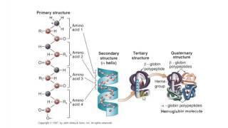 Биология в картинках: Структуры белковых молекул (Вып. 51)