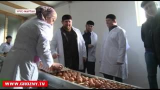Урус-Мартановская птицефабрика готовится к расширению производства
