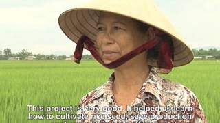 Rice Seed Production Hub Project in Hoa Tien
