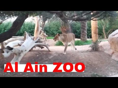Al Ain Zoo   Best attraction in Al Ain
