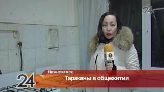 В Нижнекамске тараканы атаковали общежитие