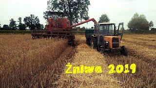 Żniwa 2019 / Pszenżyto / Bizon zo56 & Ursus c-360 Przyczepy