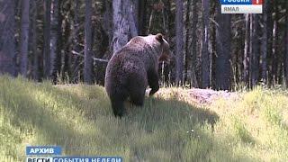 На Ямале впервые за многие годы медведь напал на человека(Подробнее: ..., 2014-10-12T06:56:43.000Z)