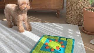 내 강아지의 두뇌게임 노즈워크 장난감 니나오토슨 4단계