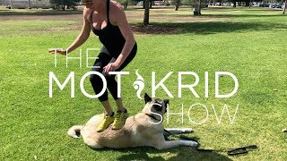 Low Budget Vacation | Puppy Crossfit | Fitness | Akita | Dogs | Spotify