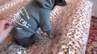 Бандероль из Китая. Куртка для собаки породы той-терьер. Магазин ALIEXPRESS
