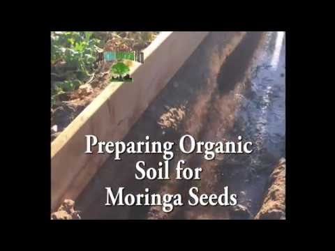 Organic Soil used for Moringa Trees and Garden Beds.
