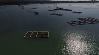 Hamparan Keramba jaring apung (KJA) Segi Empat AquaTec di Tanjung Lesung, Pandeglang