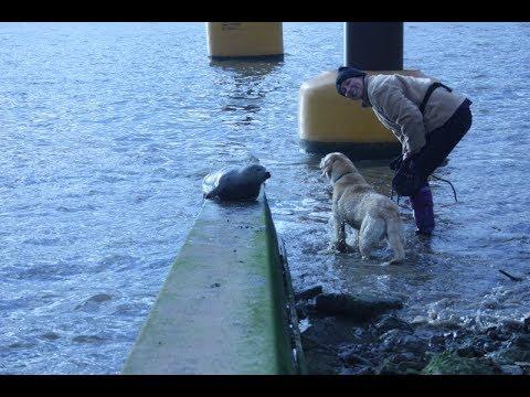 mudlarking-on-the-river-thames-london---seal-encounter