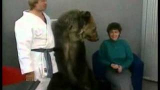 bear attacks woman