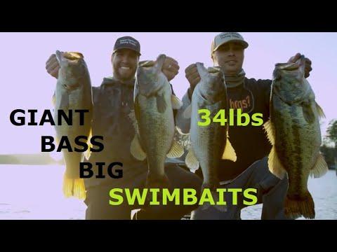 Lake Burton Fishing Guide- Giant Bass On Big Swimbaits