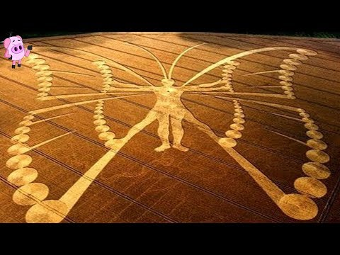 10 Amazing Crop Circles That Have Left Authorities Stunned