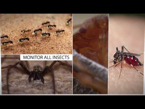 Delta Five's Bed Bug Monitoring System