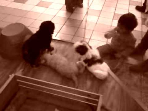The little boy and the puppies....... from YouTube · Duration:  36 seconds
