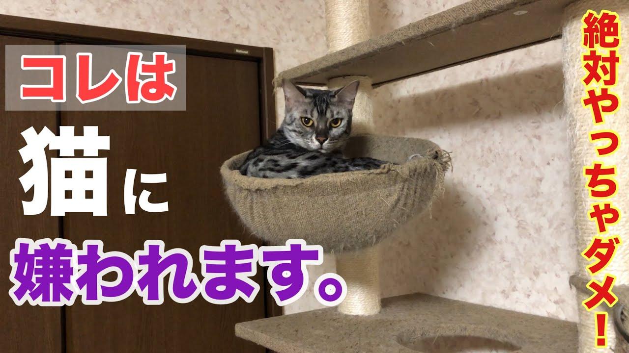 猫に嫌われたくないなら絶対にコレはダメ!?メス猫の特徴がコチラ