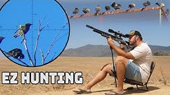 EZ Hunting - Airgun Pest Control