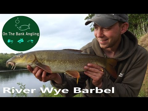 Barbel Fishing on The River Wye -Opening two days