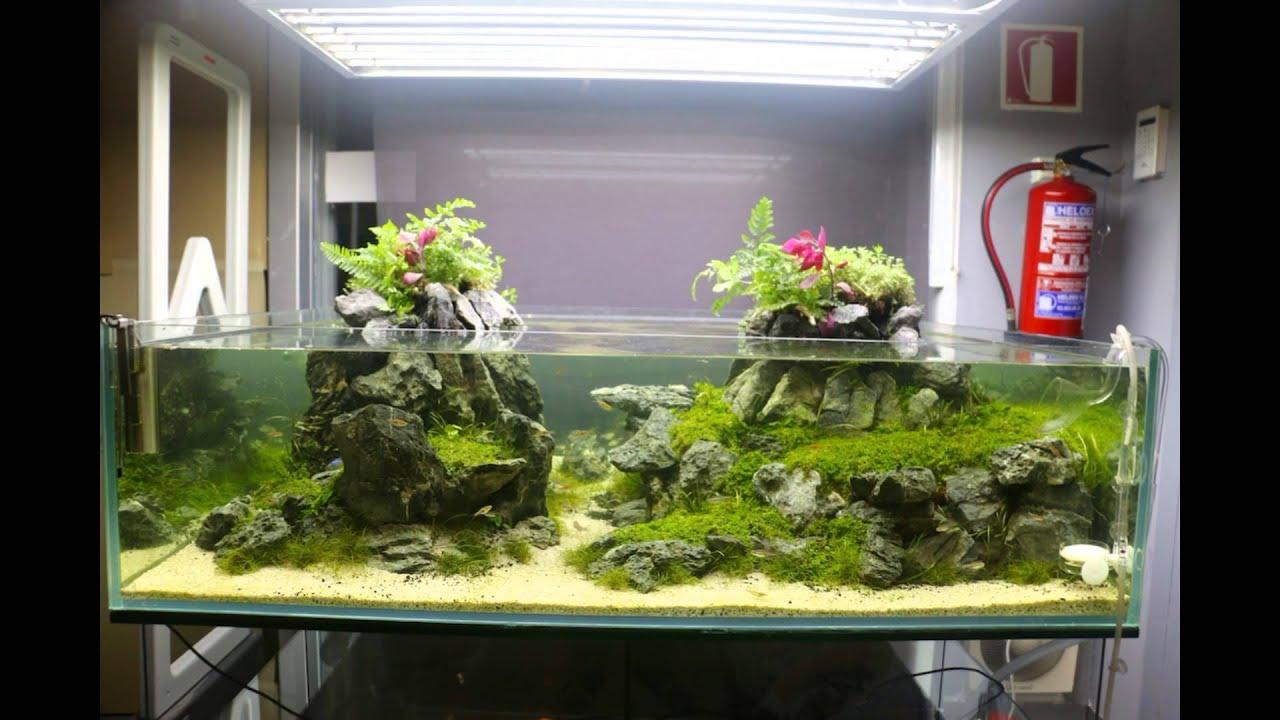 Aquarium Bonsai Youtube
