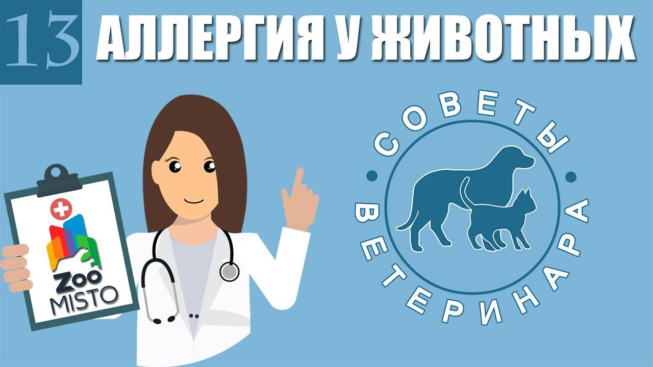 против аллергии у собак