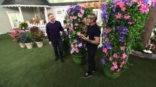 Cottage Farms Dazzling Design Clematis Duo on QVC